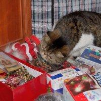 Кот и Новый год. :: Александр Зуев