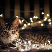 Новогоднее настроение :: Deshmidt
