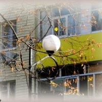 Фонарь в осеннем городе :: Нина Бутко