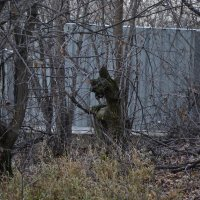 ослик из пенька заблудился :: Alexandr Yemelyanov
