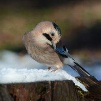 И на Кубани видели снег. :: Светлана Ивановна Медведева