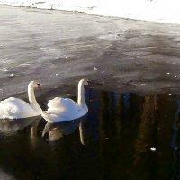 В монастырском пруду.. :: Антонина Гугаева