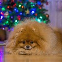 Тоже ждем Деда Мороза. :: Дмитрий .
