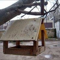 Пустой домик на дереве :: Нина Корешкова