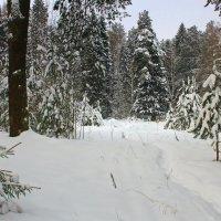 В лесу :: Галина Новинская