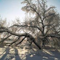 Так робко солнце светит в декабре.. :: Андрей Заломленков