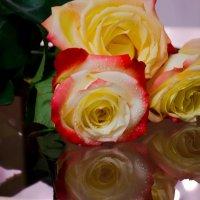 розы... три :: navalon M