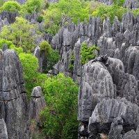 Цинги де Бемараха - каменный лес Мадагаскара :: Евгений Печенин