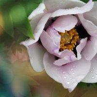 Flower :: Ирина Гавриличева