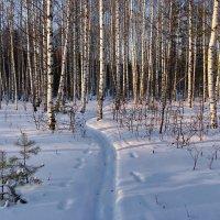 Запахло предвечерним снегом... :: Лесо-Вед (Баранов)