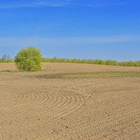 Весенний пейзаж :: bajguz igor