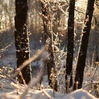 Зимние переливы :: sorovey Sol
