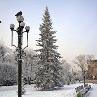 Морозный день. :: юрий Амосов
