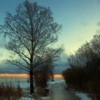 вечер....закат...берёза... :: Ольга Cоломатина