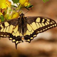 потребление жёлтого нектара :: Александр Прокудин