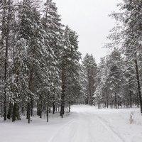 Прогулка по лесу :: Владимир Мальцев