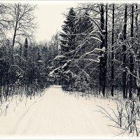 Деревья темнеют ветвистые,  грусть с пасмурной дружит погодой. :: Любовь Чунарёва