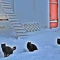 Черным по белому :: Vladimir Semenchukov
