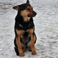Скоро,  скоро год собаки! :: венера чуйкова