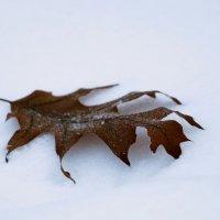 жук-снегоед :: Владимир Максимов