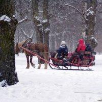 Зимняя прогулка :: vadim
