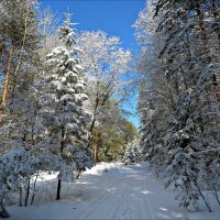 Новогодний лес :: Leonid Rutov