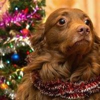 Всех с наступающим Новым годом! Годом Пса! :: Alex Ander
