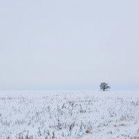 Зимний пейзаж с одиноким деревом :: Александр Синдерёв