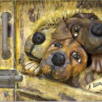 С Наступающим годом желтой собаки, друзья! :: Вячеслав Минаев