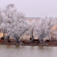 Уже скоро... (Winter is coming soon) :: Дмитрий Олегович