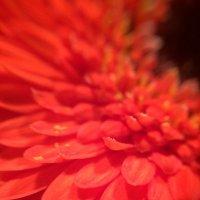 Цветок :: Эммль Buturlin