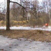 Терлеций парк в ветреную погоду :: Анна Воробьева
