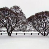 Графика зимнего дня :: Ирина Румянцева