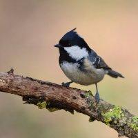Зимы нет... новых птиц нет... Работаем с теми кто есть. :: Светлана Ивановна Медведева