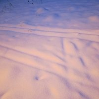 Снег декабря :: Дмитрий Никитин