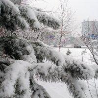 Зима :: Алексей Rus