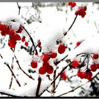 первый  снег ! :: Ivana