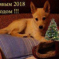 С Новым годом !!!!!!!!! :: kolyeretka