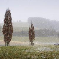 снегопад... :: Elena Wymann