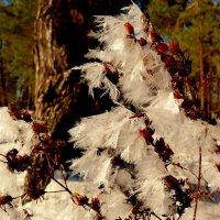 цветы Мороза 2 :: Александр Прокудин