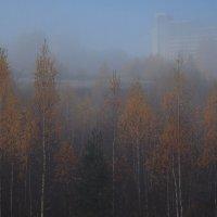 Туман. :: Владимир Гришин