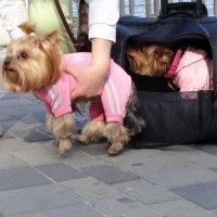 Старт в новую собачью  жизнь!... :: Алекс Аро Аро
