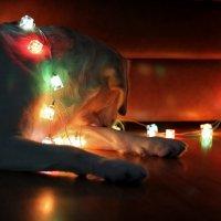Подготовка к встрече своего Нового года!) :: VADIM *****