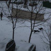 Красивый собачий кадр) :: Борис Хантер