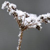 Зима 17 :: Вадим Поботаев
