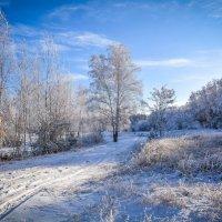 С Новым годом! :: Мария Богуславская