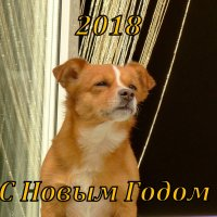 новогодняя рыжая собака :: Александр Прокудин