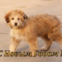 новогодний рыжий пёс :: Александр Прокудин