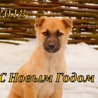 новогодний рыжий щенок :: Александр Прокудин