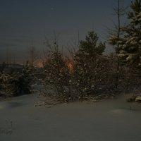 Зимняя ночь в лесу :: Сергей Шаврин